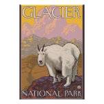 Mountain Goat - Glacier National Park, MT Poster