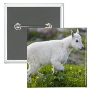 Mountain goat kid at Logan Pass in Glacier 15 Cm Square Badge