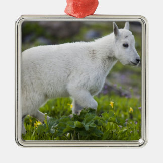 Mountain goat kid at Logan Pass in Glacier Silver-Colored Square Decoration