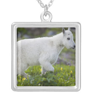 Mountain goat kid at Logan Pass in Glacier Silver Plated Necklace