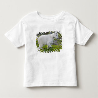 Mountain goat kid at Logan Pass in Glacier Toddler T-Shirt