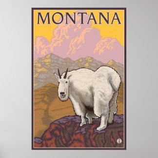 Mountain Goat - Montana Poster