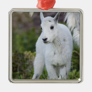 Mountain goat nanny with kid at Logan Pass in Christmas Ornament