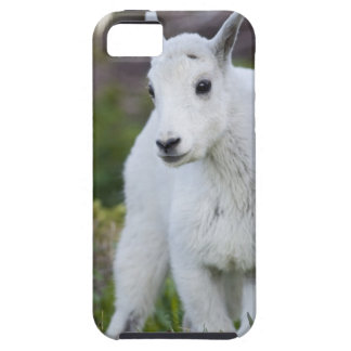 Mountain goat nanny with kid at Logan Pass in iPhone 5 Case