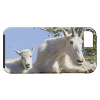 Mountain goat nanny with kid in Glacier National Case For The iPhone 5