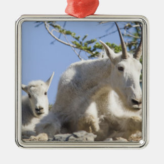 Mountain goat nanny with kid in Glacier National Silver-Colored Square Decoration