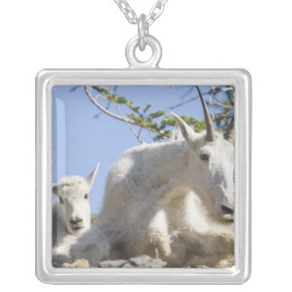 Mountain goat nanny with kid in Glacier National Square Pendant Necklace