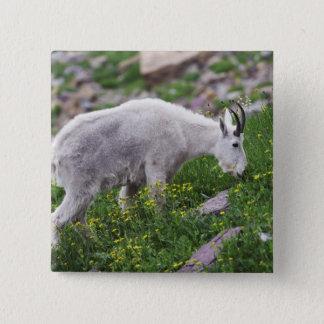 Mountain Goat, Oreamnos americanus, adult with 2 15 Cm Square Badge