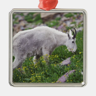 Mountain Goat, Oreamnos americanus, adult with 2 Christmas Ornament