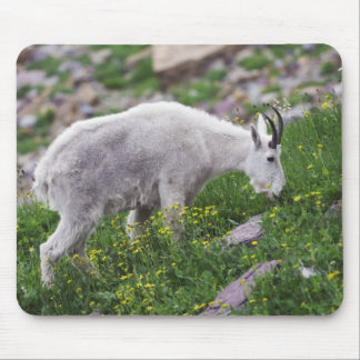 Mountain Goat, Oreamnos americanus, adult with 2 Mouse Mat