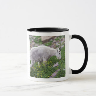 Mountain Goat, Oreamnos americanus, adult with 2 Mug