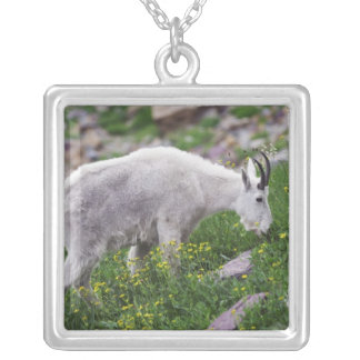 Mountain Goat, Oreamnos americanus, adult with 2 Silver Plated Necklace