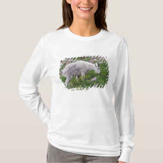 Mountain Goat, Oreamnos americanus, adult with 2 T-Shirt
