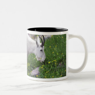 Mountain Goat, Oreamnos americanus, adult with 2 Two-Tone Coffee Mug