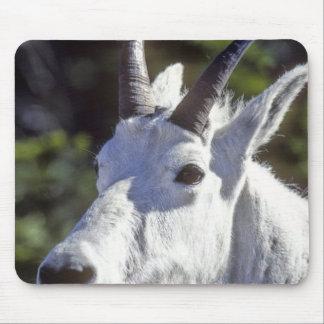 Mountain Goat, Oreamnos americanus, In Glacier Mouse Mat