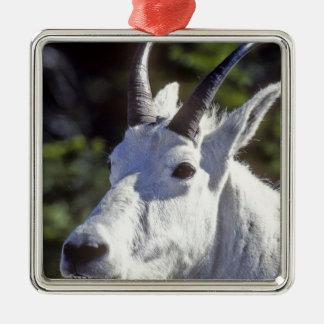 Mountain Goat, Oreamnos americanus, In Glacier Silver-Colored Square Decoration