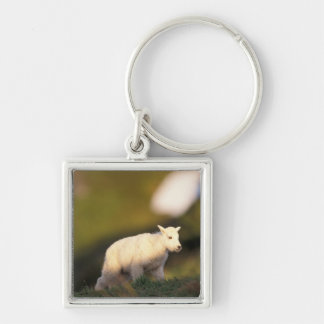 mountain goat, Oreamnos americanus, kid on a 2 Silver-Colored Square Key Ring