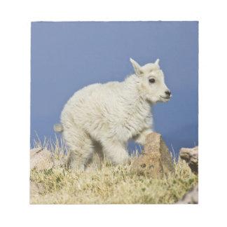 Mountain Goat (Oreamnos americanus) kid or baby Notepad