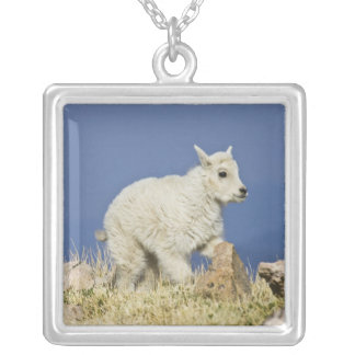 Mountain Goat (Oreamnos americanus) kid or baby Silver Plated Necklace