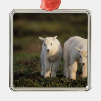 mountain goat, Oreamnos americanus, pair of Silver-Colored Square Decoration