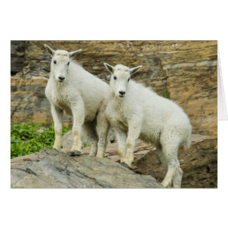 Mountain goat playing in Glacier National Park Card