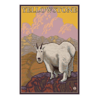 Mountain Goat - Yellowstone National Park Poster