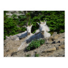 Mountain Goats on Rock Ledge Wildlife Series # 18 Postcard