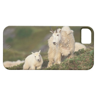 mountain goats, Oreamnos americanus, mother and 2 iPhone 5 Cover