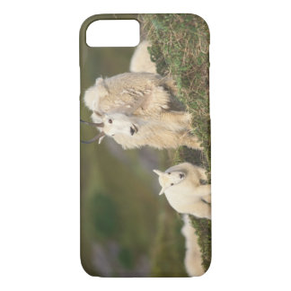 mountain goats, Oreamnos americanus, mother and 2 iPhone 8/7 Case