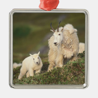 mountain goats, Oreamnos americanus, mother and 2 Silver-Colored Square Decoration