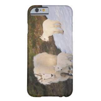 mountain goats, Oreamnos americanus, mother and Barely There iPhone 6 Case