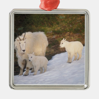 mountain goats, Oreamnos americanus, mother and Silver-Colored Square Decoration