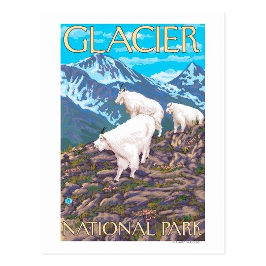 Mountain Goats Scene - Glacier National Park, Postcard