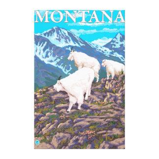 Mountain Goats Scene - Montana Canvas Print