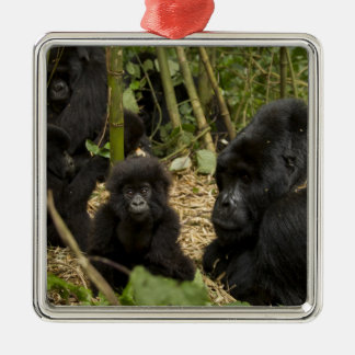 Mountain Gorilla, adult with young 2 Christmas Ornament