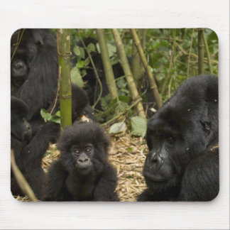 Mountain Gorilla, adult with young 2 Mouse Mat