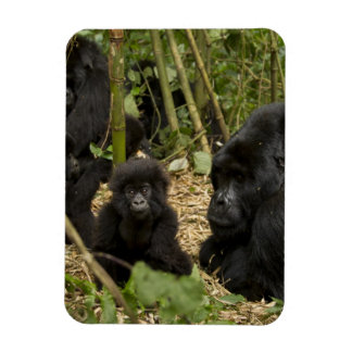 Mountain Gorilla, adult with young 2 Rectangular Photo Magnet