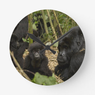 Mountain Gorilla, adult with young 2 Round Clock