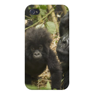 Mountain Gorilla, adult with young iPhone 4 Cover