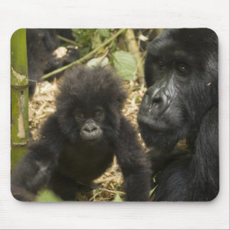 Mountain Gorilla, adult with young Mouse Mat