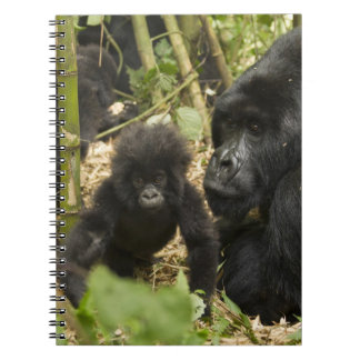 Mountain Gorilla, adult with young Spiral Note Book