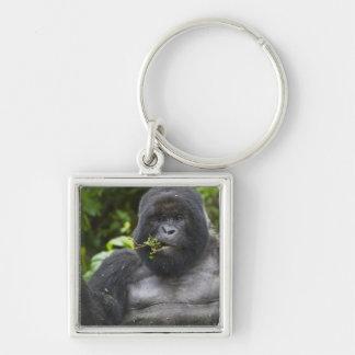 Mountain Gorilla and aging Silverback Key Ring
