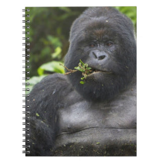 Mountain Gorilla and aging Silverback Notebook