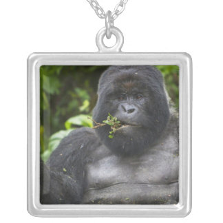 Mountain Gorilla and aging Silverback Silver Plated Necklace
