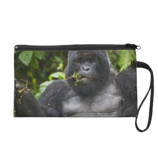 Mountain Gorilla and aging Silverback Wristlet