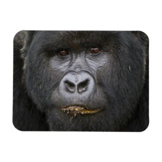 Mountain Gorilla and Silverback 2 Magnet