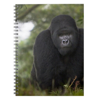 Mountain Gorilla and Silverback 3 Notebooks