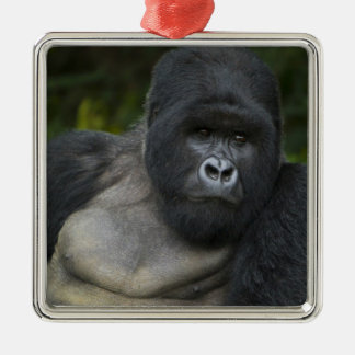 Mountain Gorilla and Silverback 5 Christmas Ornament