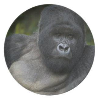 Mountain Gorilla and Silverback 5 Plate
