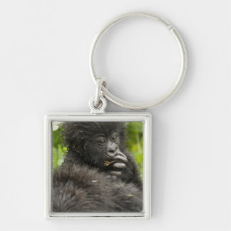 Mountain Gorilla, baby riding on mothers back Key Ring